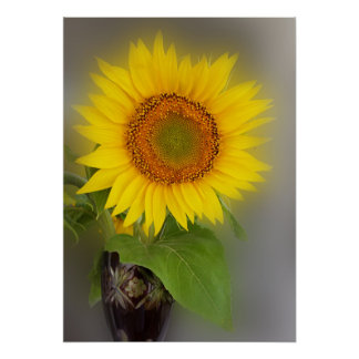a glowing sunflower poster