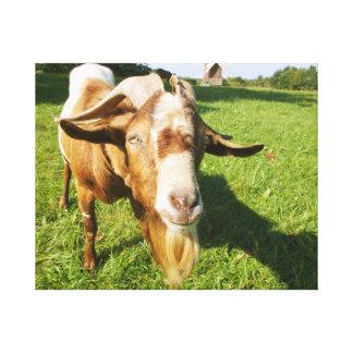 A goat - canvas
