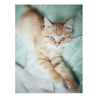 A Golden Color Kitten Lying Down Postcard