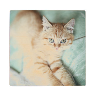 A Golden Color Kitten Lying Down Wood Coaster