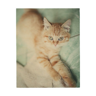 A Golden Color Kitten Lying Down Wood Print