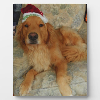 A Golden Retriever at Christmas with Santa Hat Plaque