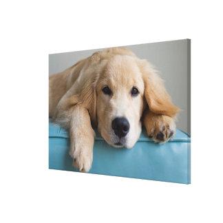 A Golden Retriever Puppy Canvas Print