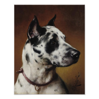 A Great Dane Poster