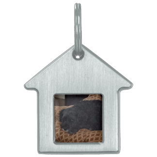 A great gift - a House Tag/Key chain for Moxie Pet Tag