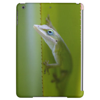 A green anole is an arboreal lizard