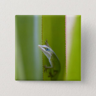 A green anole is an arboreal lizard 15 cm square badge