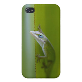 A green anole is an arboreal lizard case for iPhone 4