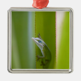 A green anole is an arboreal lizard christmas ornament