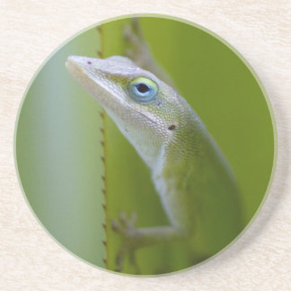 A green anole is an arboreal lizard coaster