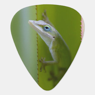 A green anole is an arboreal lizard guitar pick