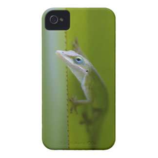 A green anole is an arboreal lizard iPhone 4 Case-Mate cases