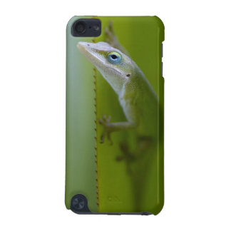 A green anole is an arboreal lizard iPod touch (5th generation) covers