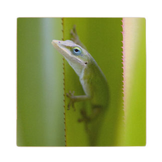 A green anole is an arboreal lizard wood coaster