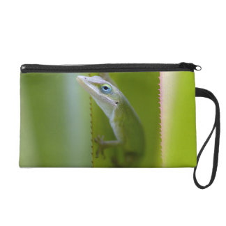 A green anole is an arboreal lizard wristlet purses