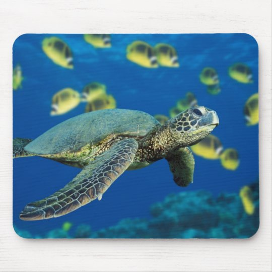 A green sea turtle swims past a school mouse mat