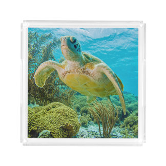 A Green Turtle On The Shallow Reefs Of Bonaire