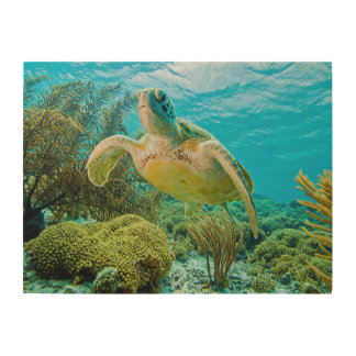 A Green Turtle On The Shallow Reefs Of Bonaire Wood Print