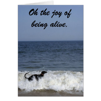 A greyhound enjoying the surf . note card
