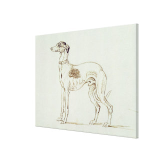 A Greyhound, Facing Left (pen & ink on paper) Canvas Print