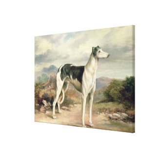 A Greyhound in a hilly landscape Canvas Print