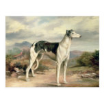 A Greyhound in a hilly landscape Postcard