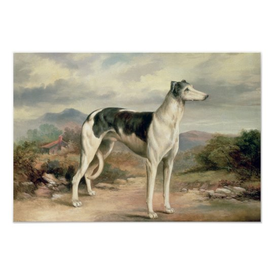 A Greyhound in a hilly landscape Poster