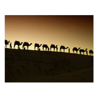 A group of camel herders with their camels at postcard