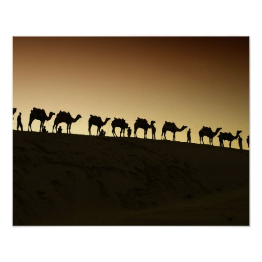 A group of camel herders with their camels at posters