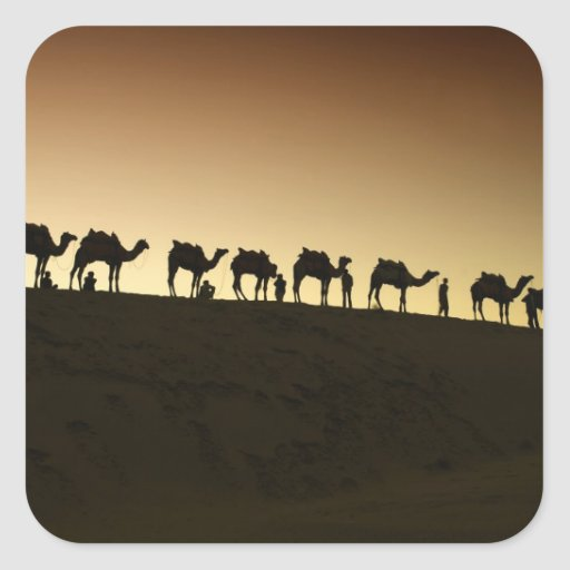 A group of camel herders with their camels at square stickers
