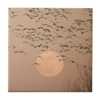A group of migratory snow geese tile
