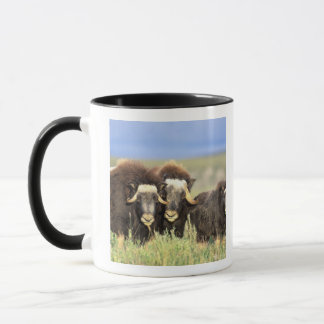 A group of muskoxen browse on willow shrubs on mug