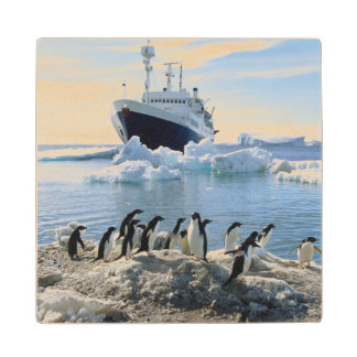 A Group Of Penguins Standing On An Icy Beach Wood Coaster