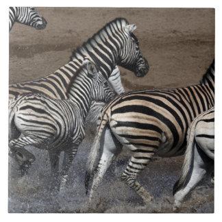 A group of Planes Zebra (Equus quagga) at a Tile