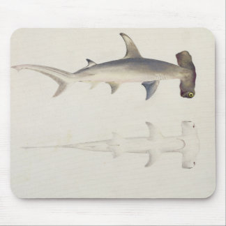 A Hammer-headed Shark, Loheia, formerly attributed Mouse Mat