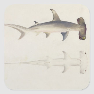 A Hammer-headed Shark, Loheia, formerly attributed Square Sticker