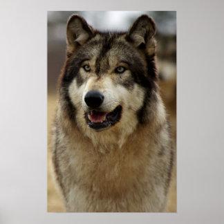 A Happy Wolf Print
