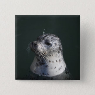 A harbor seal 15 cm square badge