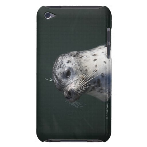 A harbor seal iPod touch cases
