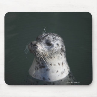 A harbor seal mouse mat