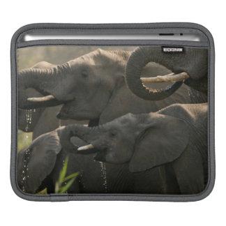 A Herd Of African Elephants (Loxodonta Africana) iPad Sleeve