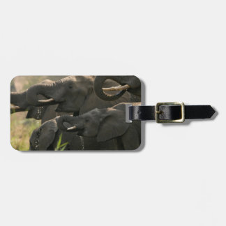 A Herd Of African Elephants (Loxodonta Africana) Luggage Tag
