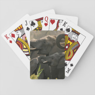 A Herd Of African Elephants (Loxodonta Africana) Playing Cards