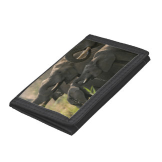 A Herd Of African Elephants (Loxodonta Africana) Trifold Wallets