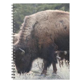 A Herd of Brown Bison Graze in a grassy Meadow Notebook