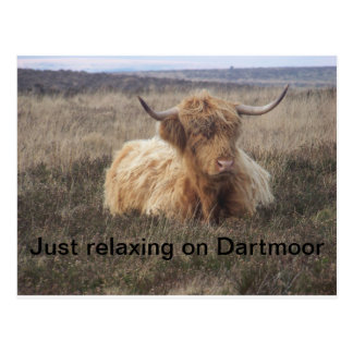 A highland cow relaxing on Dartmoor Post Card