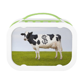 A Holstein Dairy cow with spots in the shape of Lunch Box