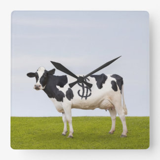 A Holstein Dairy cow with spots in the shape of Square Wall Clock