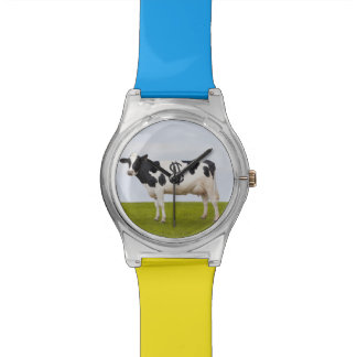 A Holstein Dairy cow with spots in the shape of Wristwatch