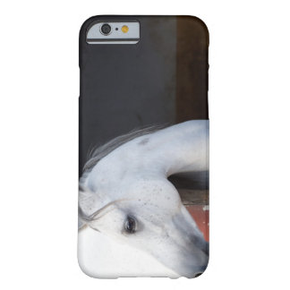 A Horse (Equidae) Barely There iPhone 6 Case
